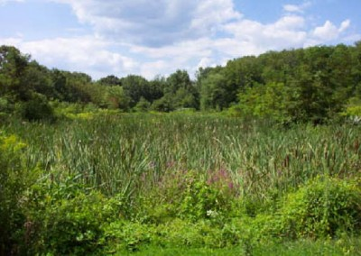 This photo shows the second pond at the Dundee Road Educational Wetland site after years of plant growth with a strong well-established root system.