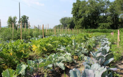 EC Community Garden Receives Grants from PA Department of Agriculture, Price Chopper Golub Foundation
